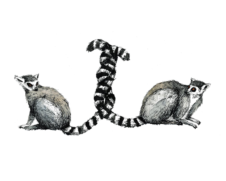 Entangled Lemurs