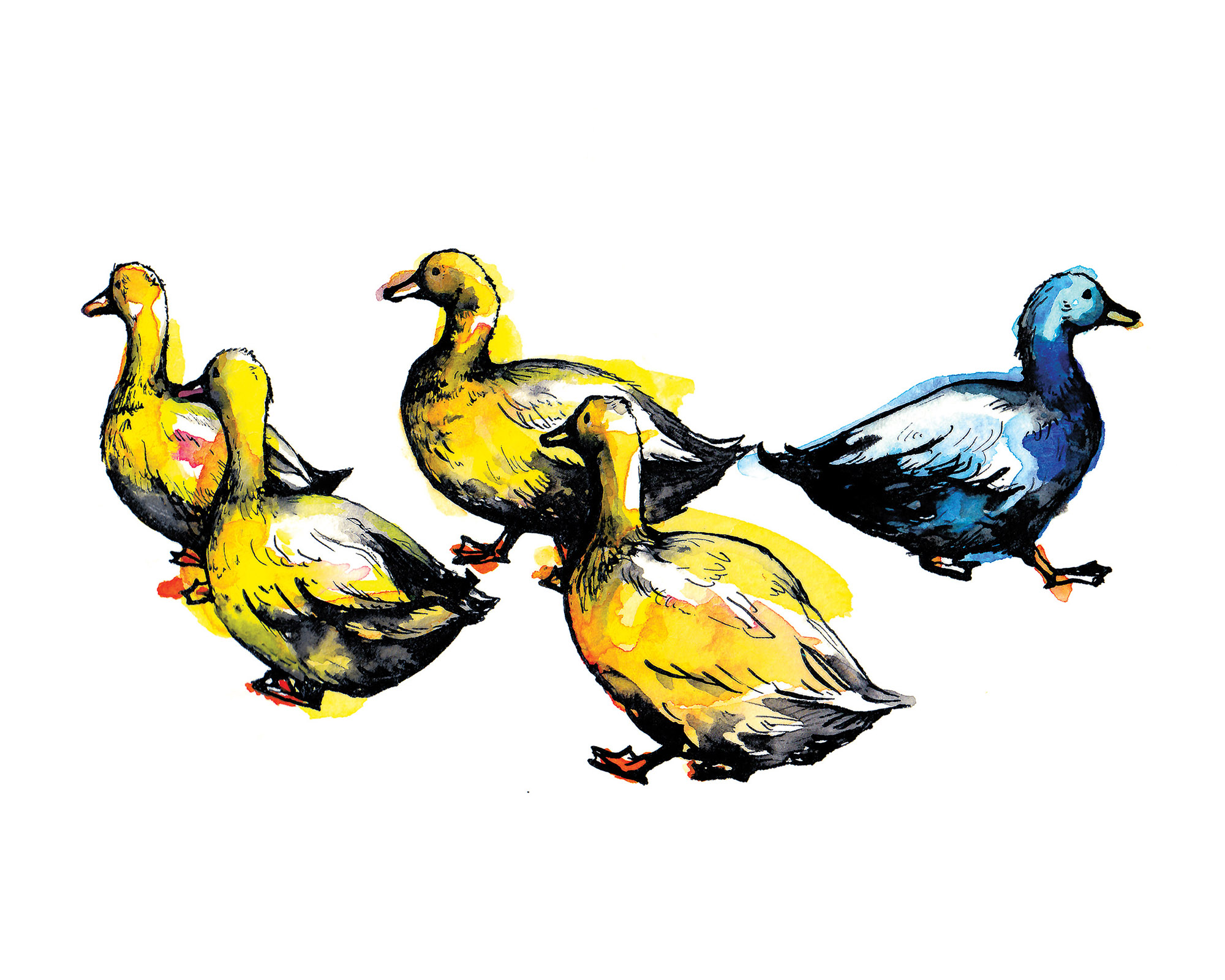 Four Blondes and A Blue (Swedish Ducks)