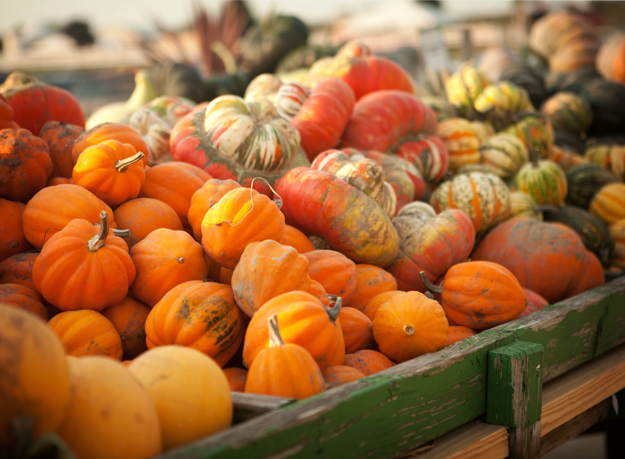 eckerts-millstadt-pick-your-own-pumpkins