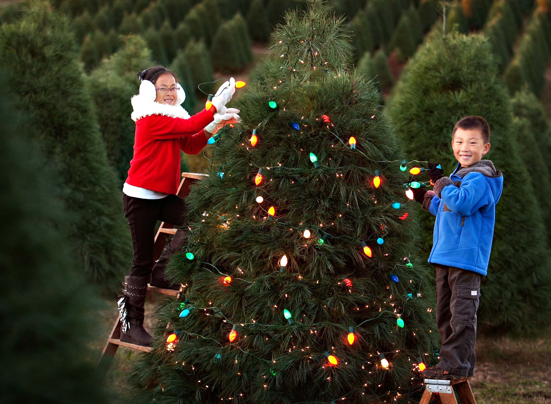 eckerts-millstadt-pick-your-own-christmas-trees