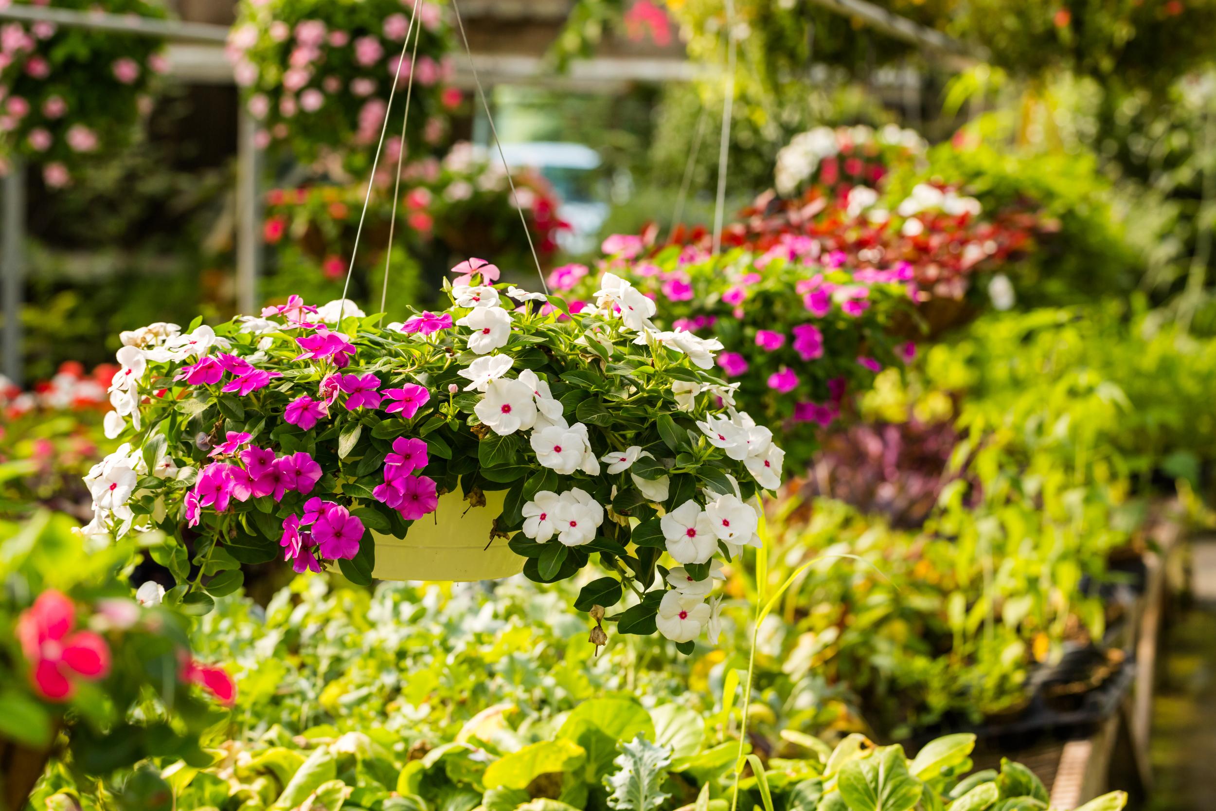 Plant Nursery In Belleville