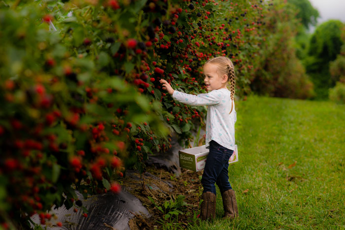 Elle-picking-blackberries.jpg