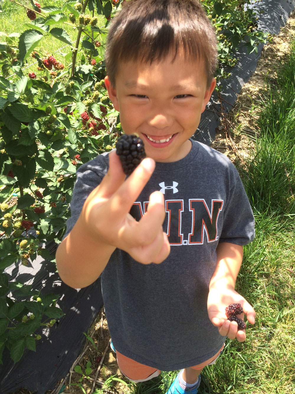 blackberry-picking-Theo.jpg