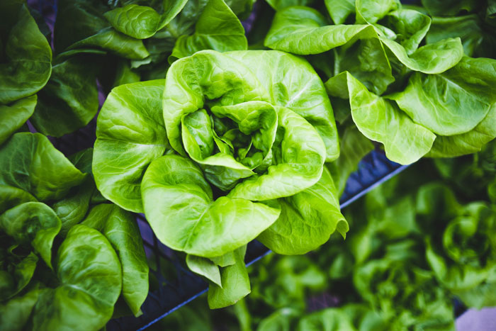 Hydroponic-lettuce-close-up---for-blog.jpg