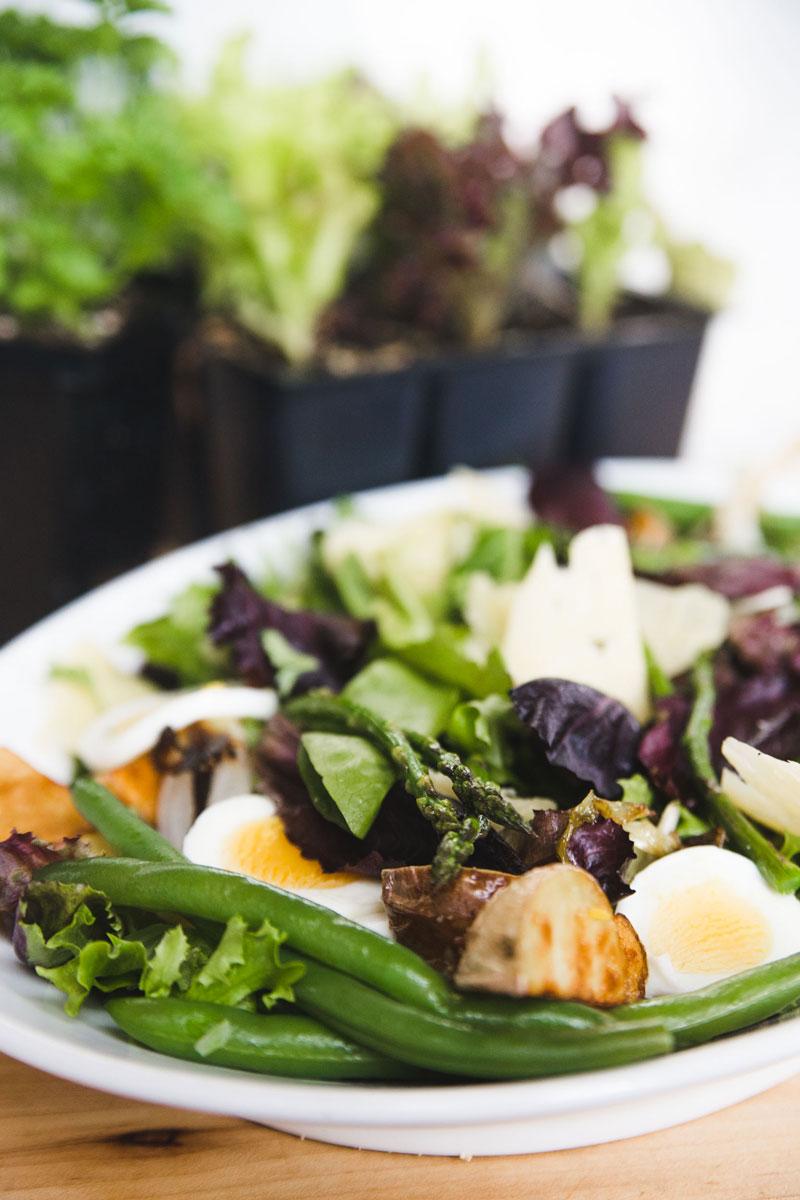 Spring-Salad-with-Herbs-1.jpg