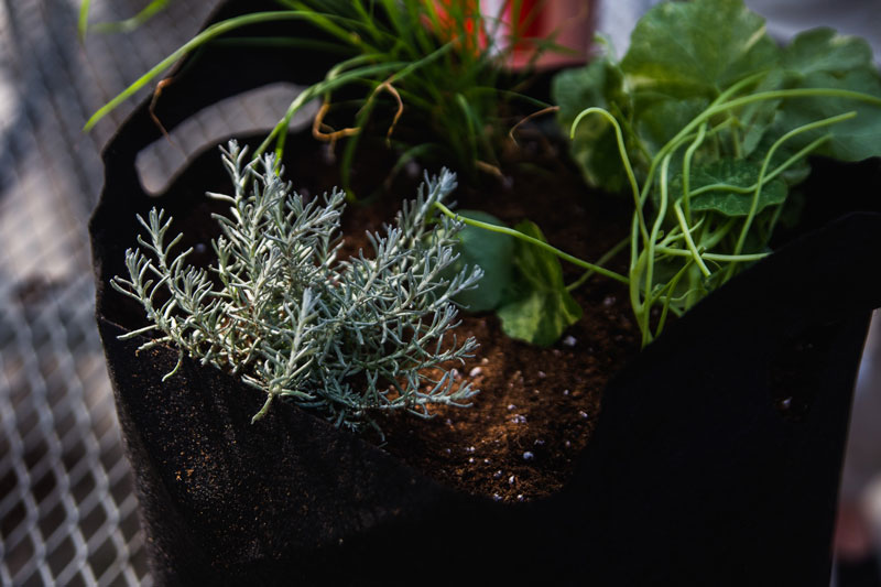 Growing-Herbs-with-Angie-Eckert-4.jpg