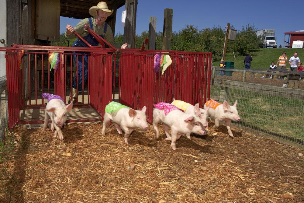 Pig-races-8.jpg