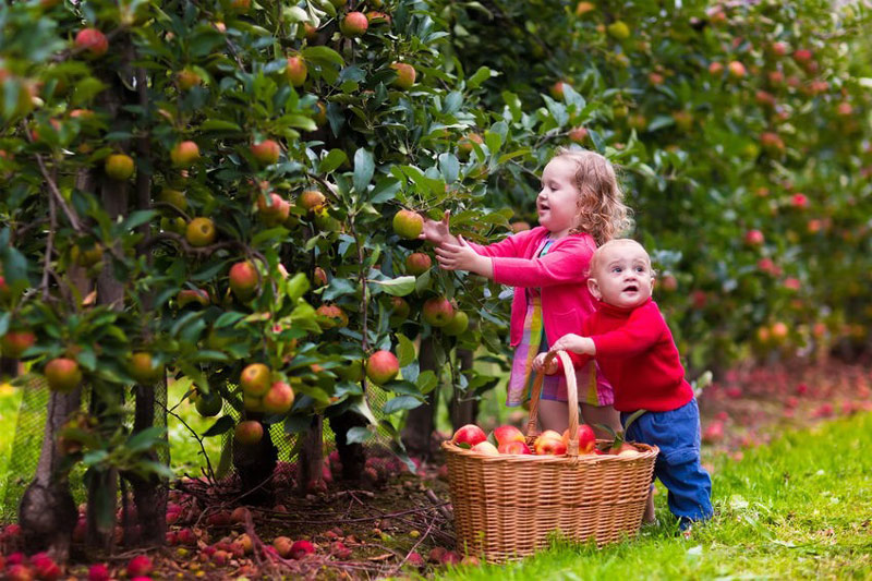 Best-Time-of-Year-to-Pick-Apples.jpg