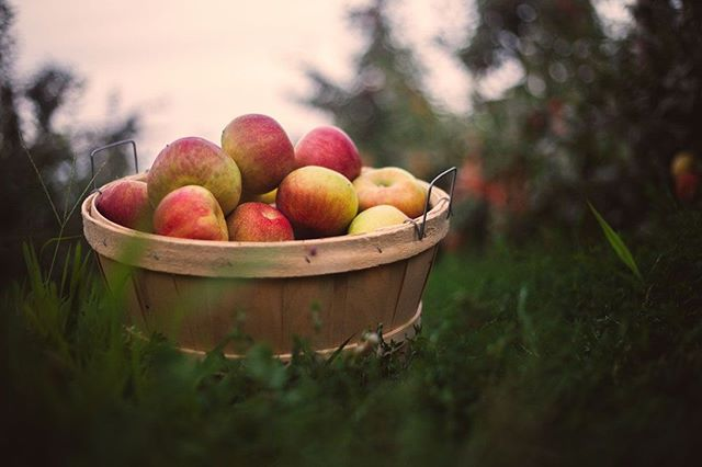 Crunch, crisp and oh so good. Honeycrisp apples will be available starting tomorrow. Don't miss them.⠀ -⠀ -⠀ -⠀ -⠀ -⠀ #eckerts #eckertsorchard #apples #honeycrispapples #honeycrisp #limitedtime #versaillesky #versailleskentucky #kentuckyproud #eatfresh #buylocal #farmtotable #visitlex
