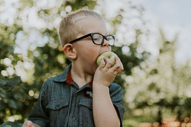 Apples so good, you just have to taste them in the field.⠀ -⠀ -⠀ -⠀ -⠀ -⠀ #eckerts #eckertsorchard #apples #honeycrispapples #honeycrisp #limitedtime #versaillesky #versailleskentucky #kentuckyproud #eatfresh #buylocal #farmtotable #visitlex