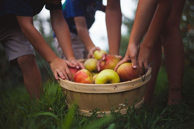Load up the basket - honeycrisp apples are available today only.⠀ -⠀ -⠀ -⠀ -⠀ -⠀ #eckerts #eckertsorchard #apples #honeycrispapples #honeycrisp #limitedtime #versaillesky #versailleskentucky #kentuckyproud #eatfresh #buylocal #farmtotable #visitlex