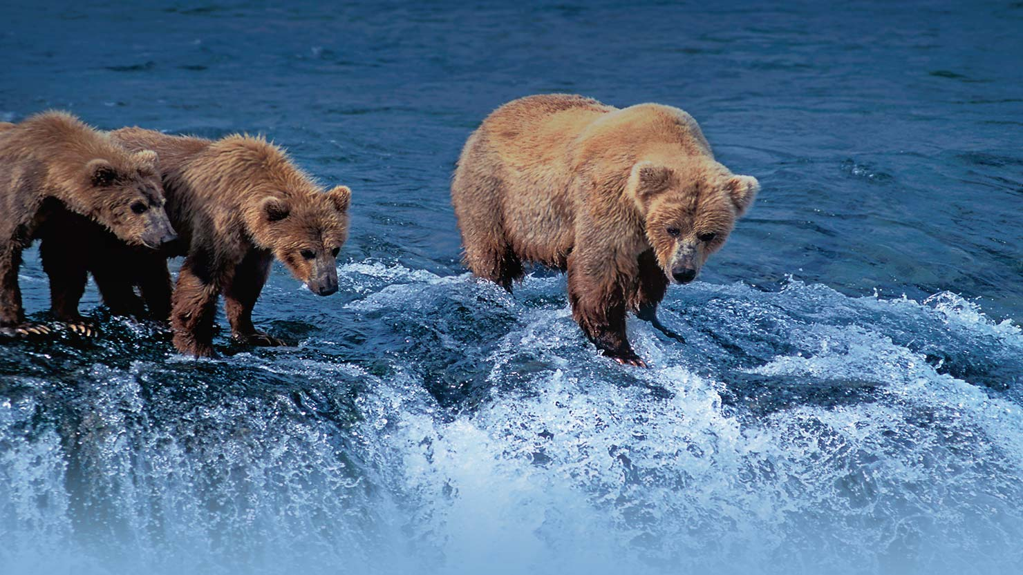 HPHero_AK-bears_lg_020416.jpg
