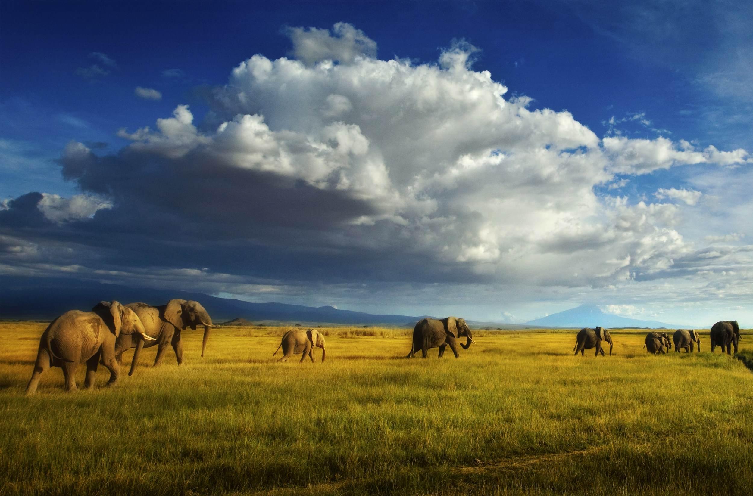 hp-elephant-herd.jpg