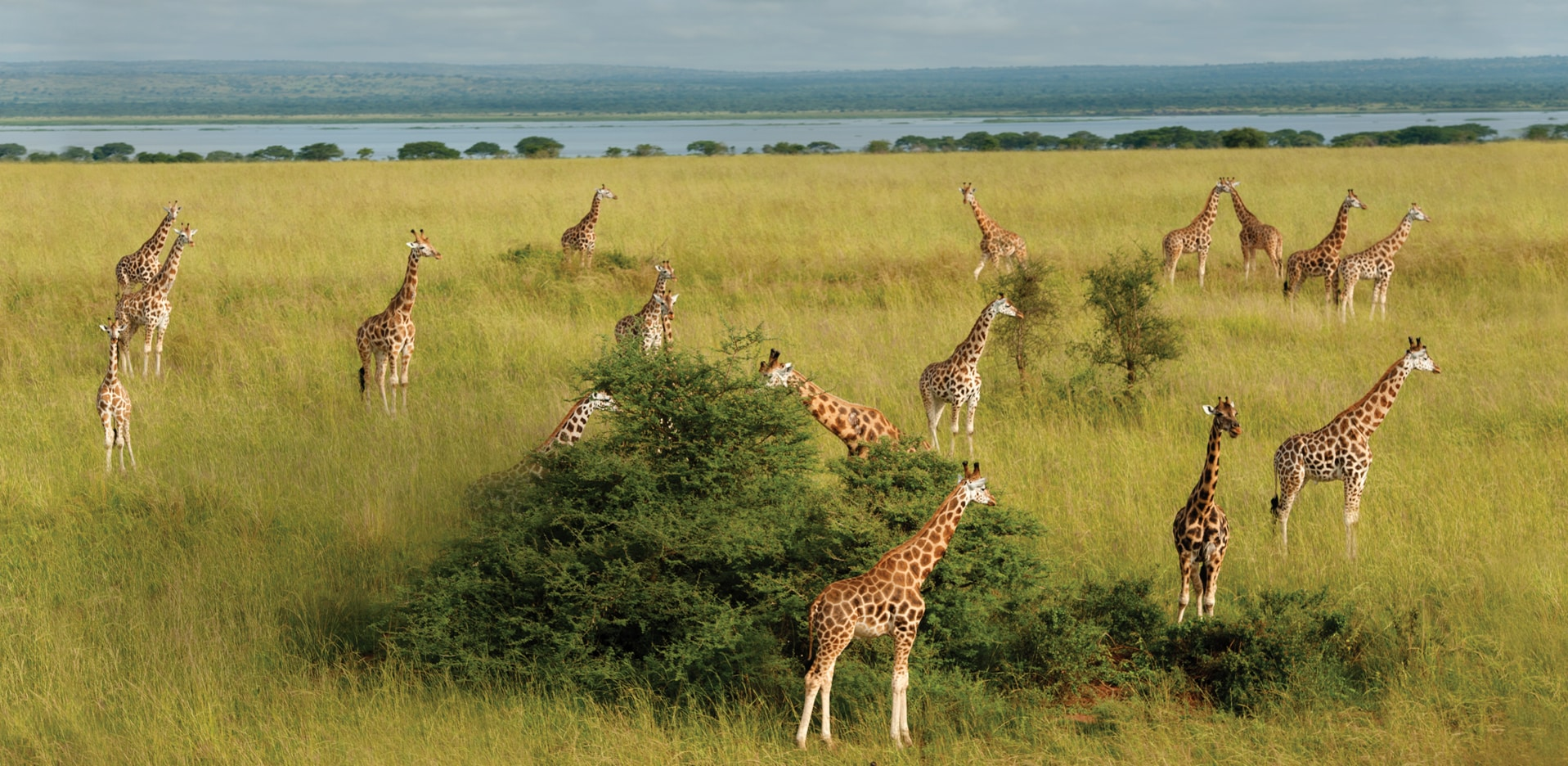 three-ways-safari.jpg