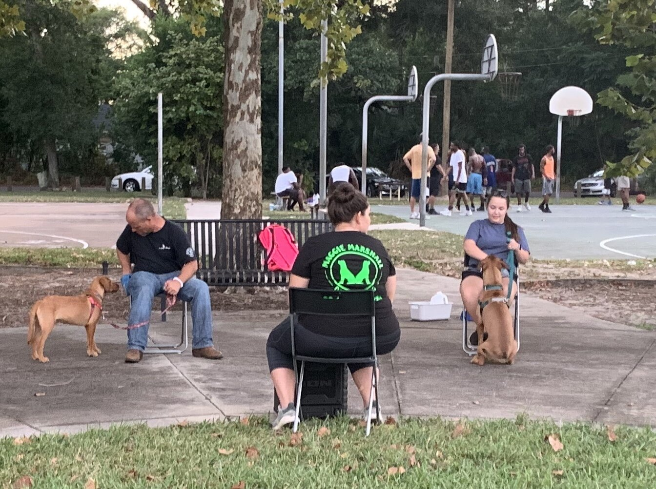 Musical Chairs and Focus on Owners at Fishweir Park.