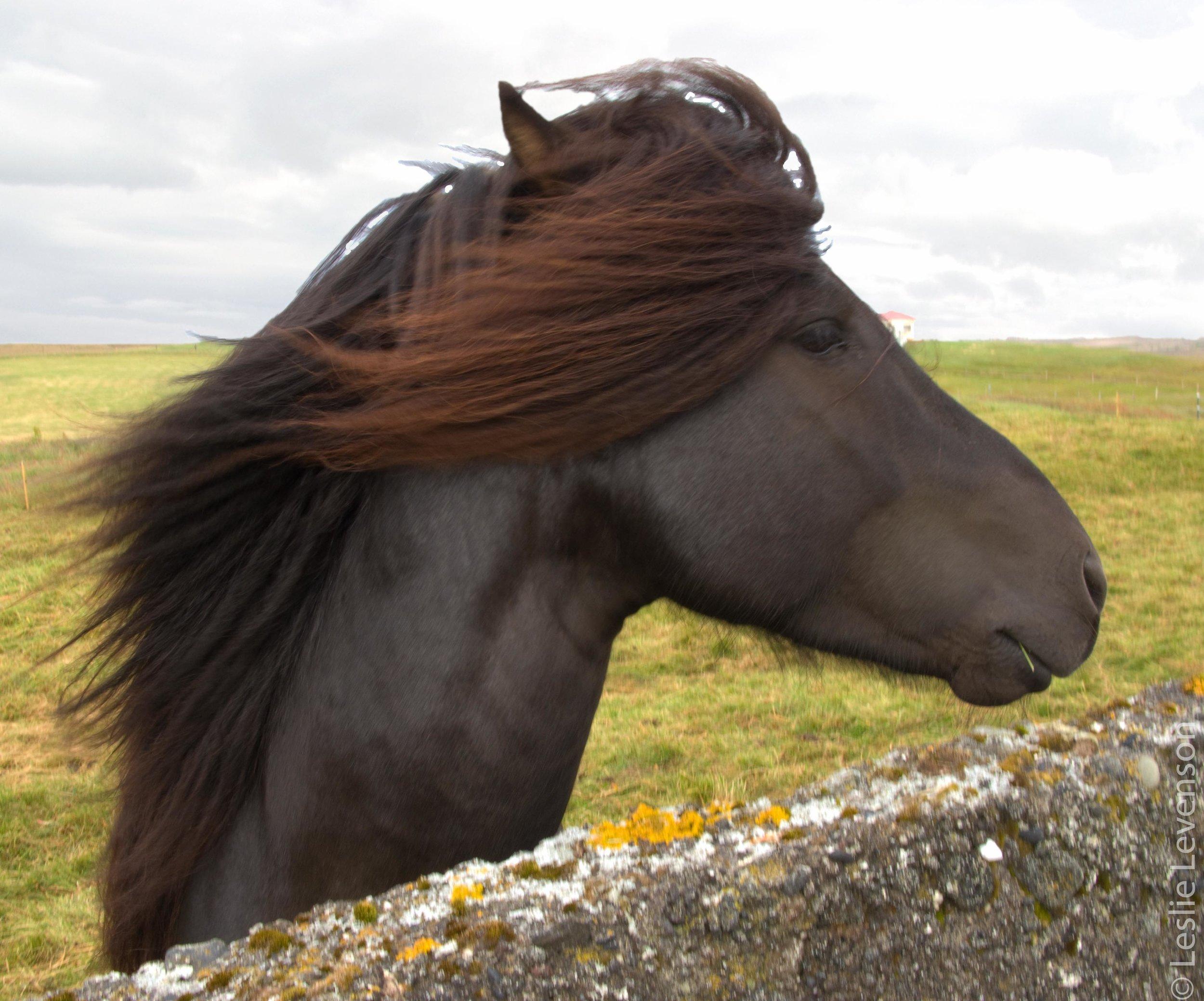 Hellissandur-horsehead.jpg