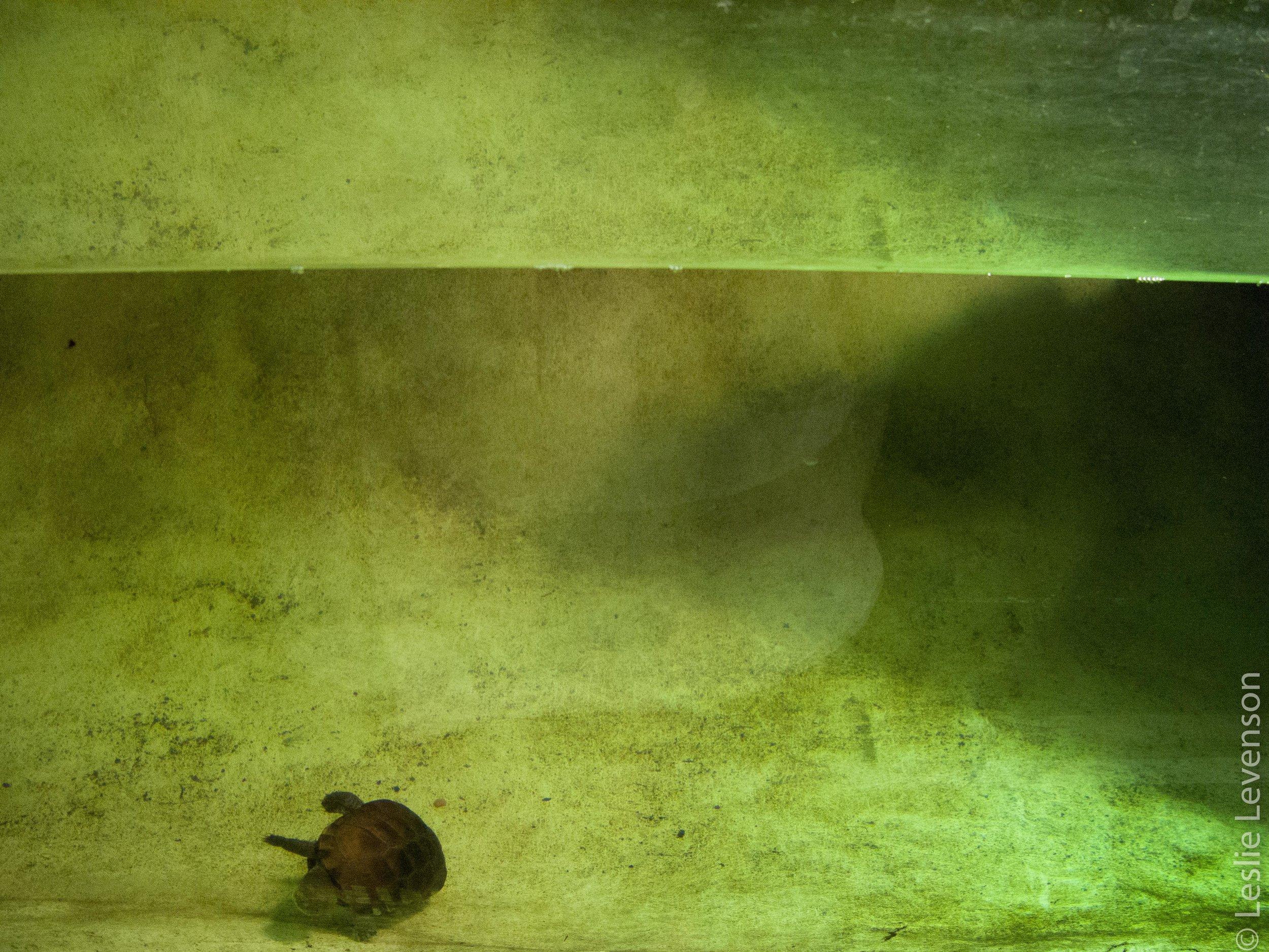 Turtles 2.jpg