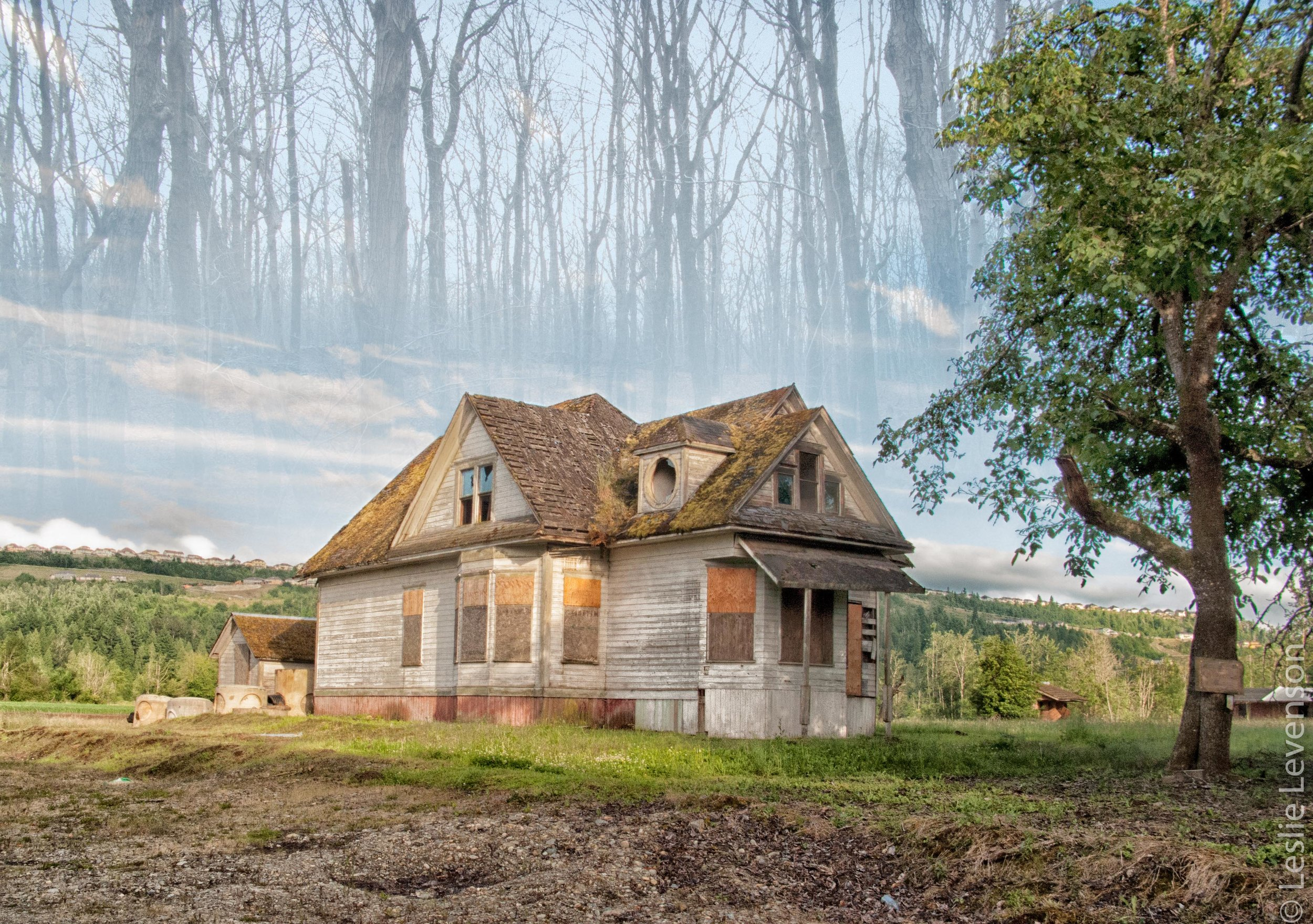 Ghost house with trees.jpg