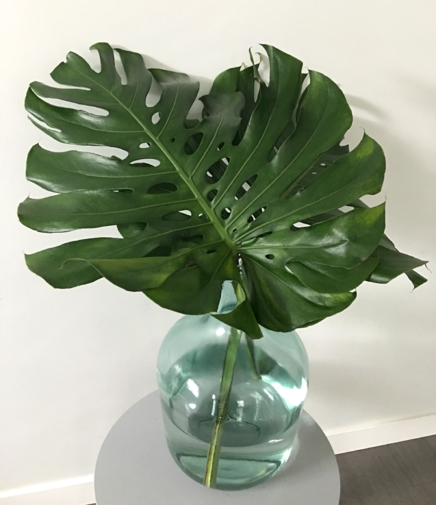 monstera leaves from @bloomroomvancouver