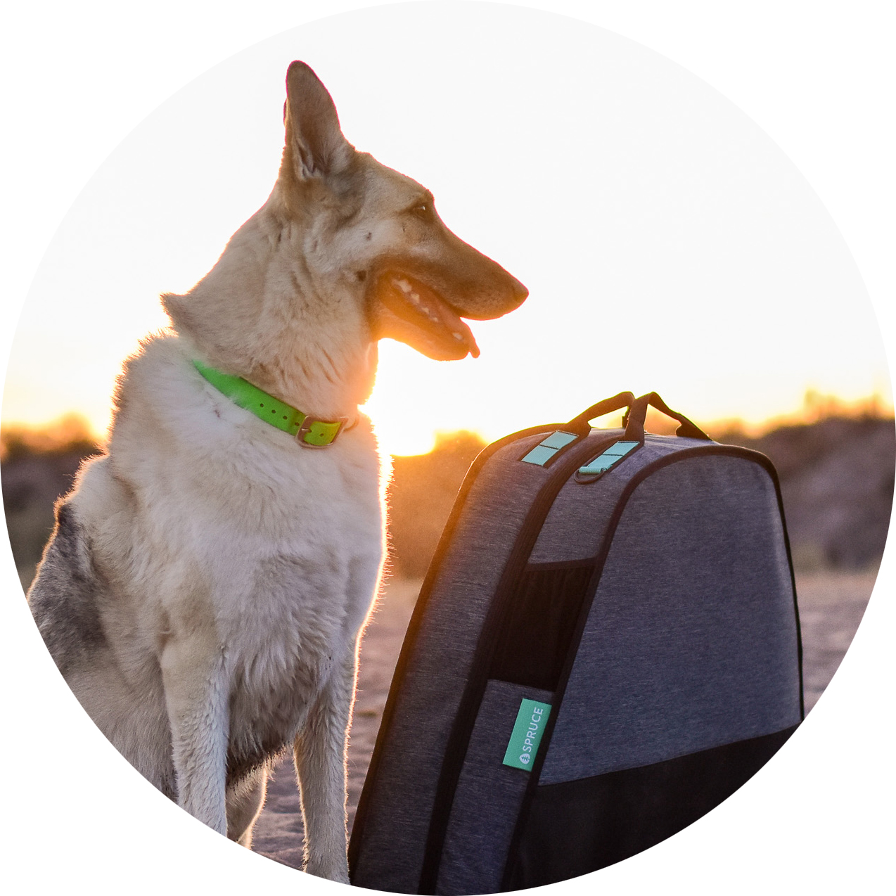 "- ""Comfort and portability are the two main features of the Spruce pup travel bed. I'm blown away by how well made this bed is and will never be caught traveling with out it!""- @dustydesertdogs"