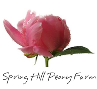 SPRING HILl:  Peony Paddock Picnic and Pick your own surrounded by five acres of blooming peonies. Farm gate sales every day during the season. Pre ordered wedding flowers. Weddings in the Little Church.