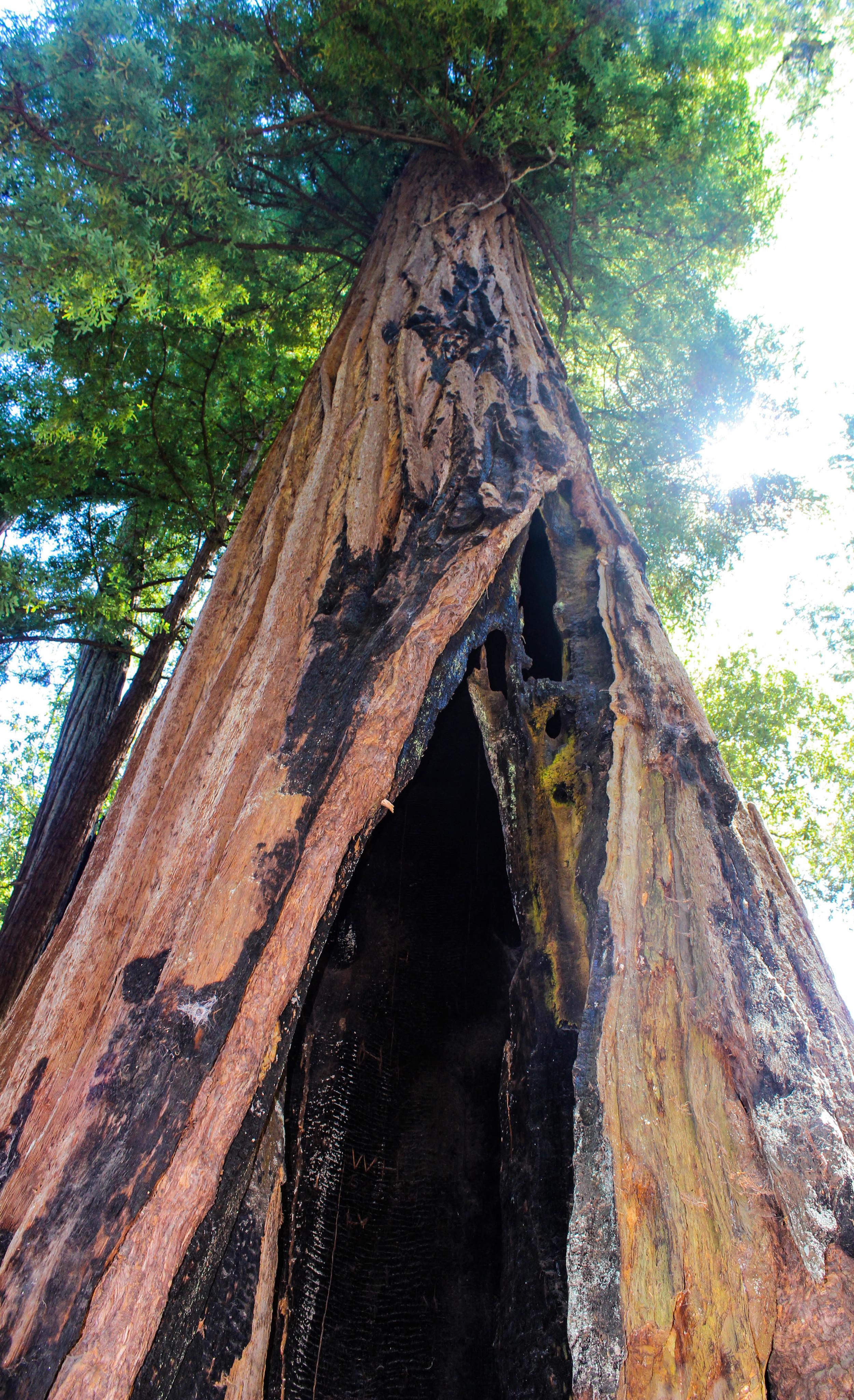 Redwood Resistance