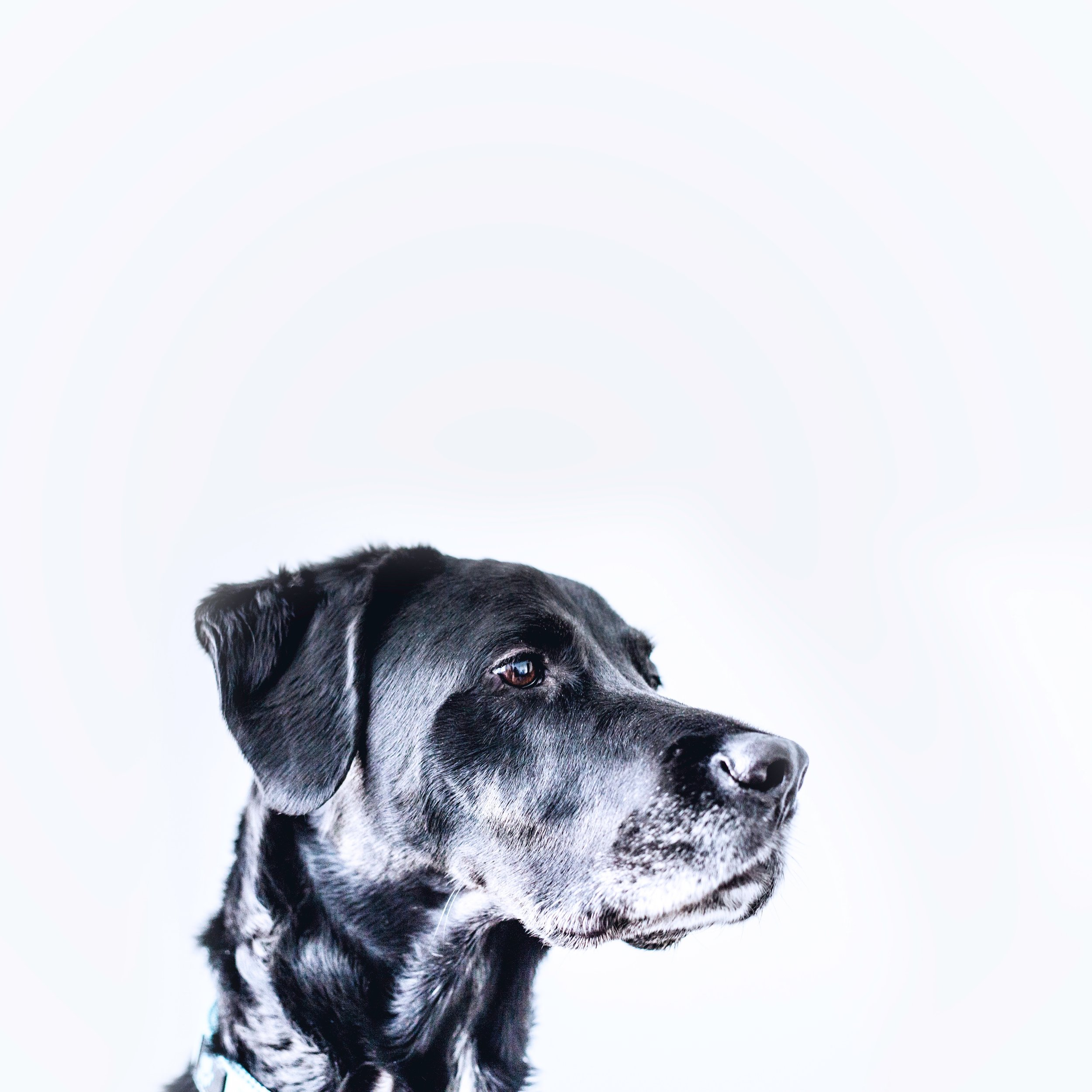 """Good boy - Good shareable content is that dog that everyone wants to pet. """"Good"""" is not so much a descriptor of the content as it is a descriptor of the connection it's able to generated between people."""