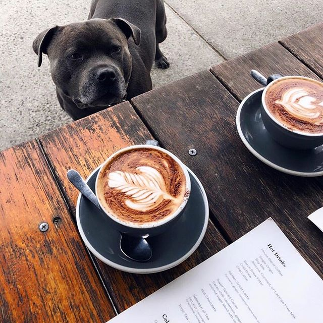 ☕ + 🐩 , all we ask for (and all we will accept) on a Monday morning.   📸@rocco_staffy_adventures