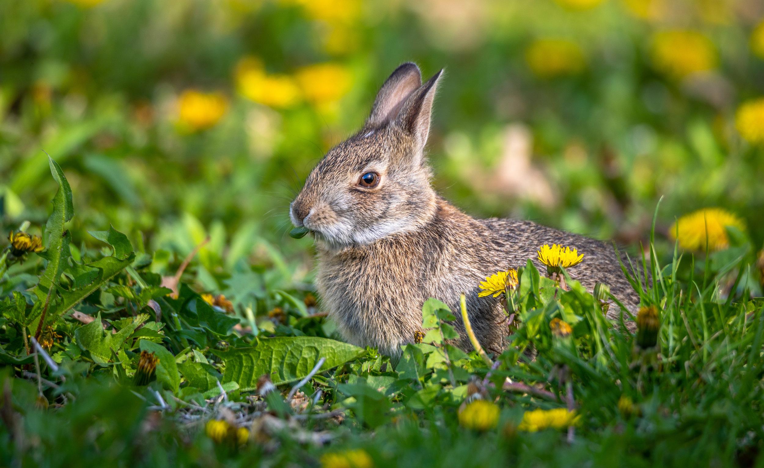 Easter Rabbit.jpg