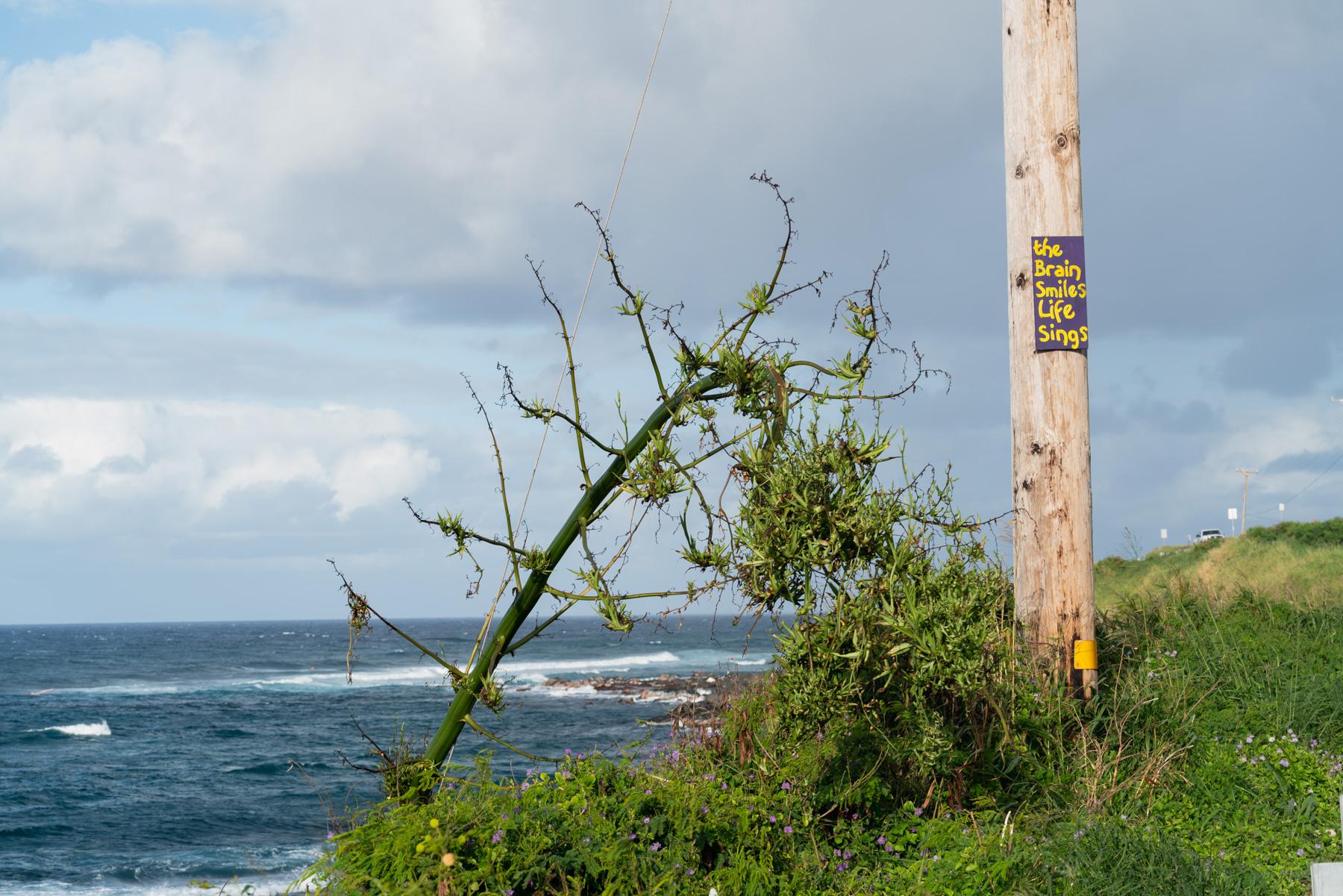 Maui-Trip-Kite-24.jpg