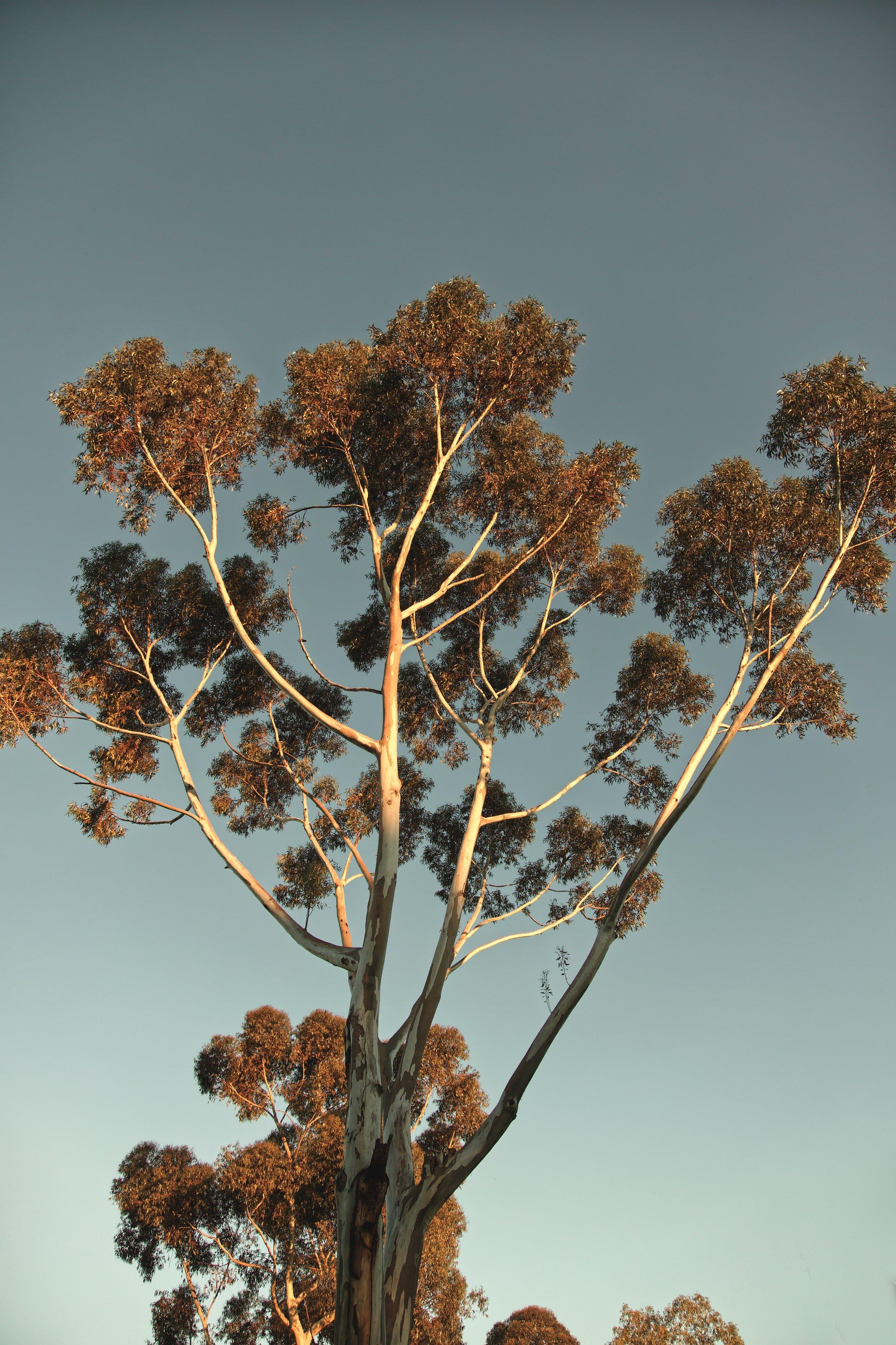 Scar Trees - Madeleine Dunn, Emma Snibson, Mai Nguyen, Bianca Fernandes