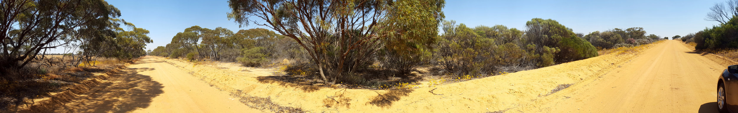 Mallee woodland/scrub (notice the change color of the road).