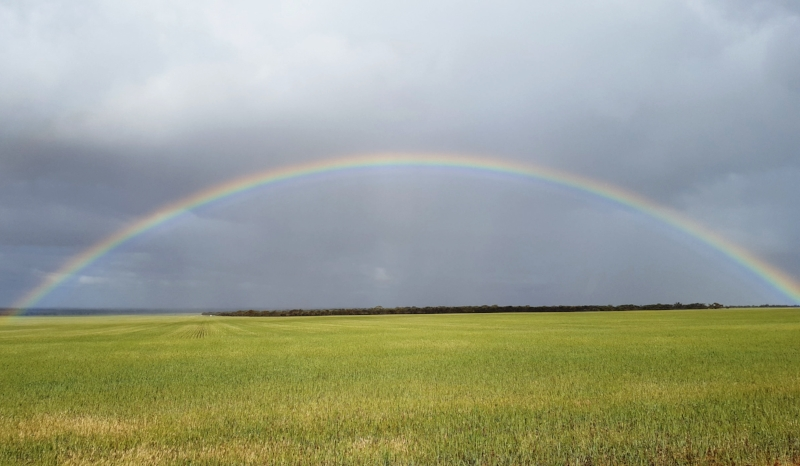 Rainbow over a wheat field next to the reserve