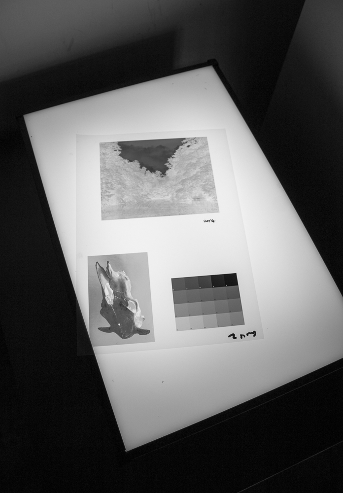 Digital negatives on the lightbox.