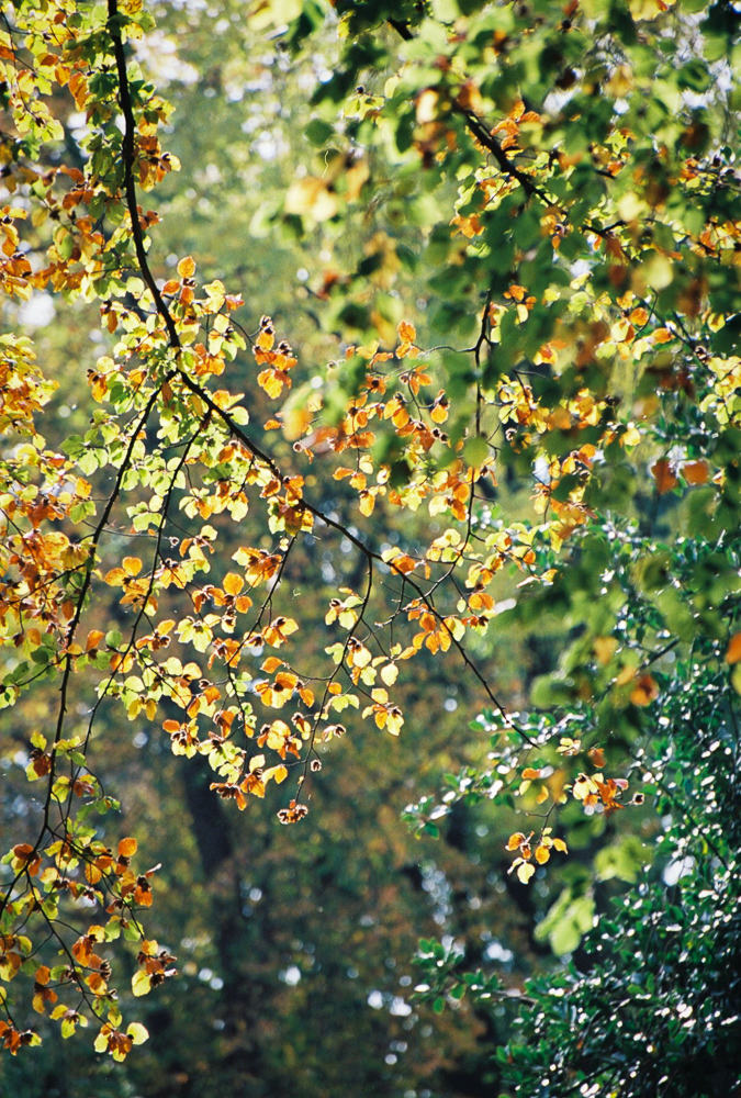 Shooting some autumn colour with Kodak Ektar film and a 70-300 lens. This is the scan straight from the lab. Should I choose to make a print, I'll scan it myself and make the necessary adjustments as I print. There's certainly a tad more sharpness and bite to be drawn out with my own scan and print, and I'll be able to look at the colour more critically.