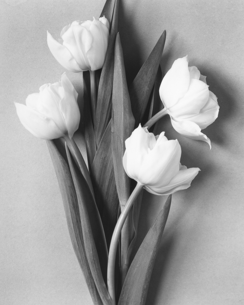 A still life demonstrates the close focussing abilities. Here the bellows are extended, but could extend more. Another scan of a contact print and again Delta 100 film.