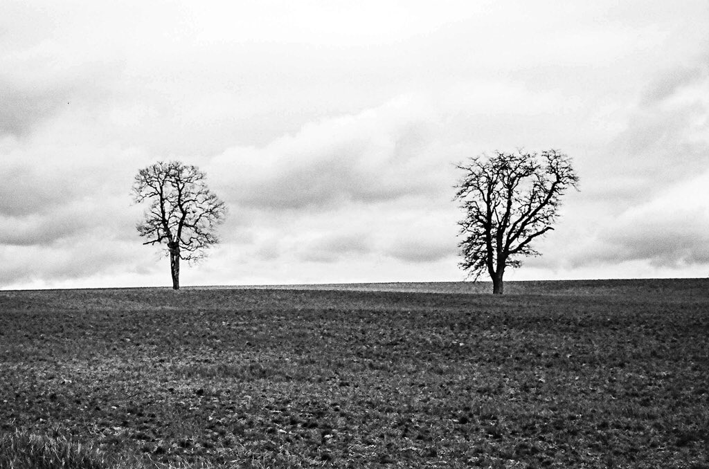 Philip Constant,  Two Trees, Santiam Hills,  Ilford Delta 100 film, lab developed by Ilford USA