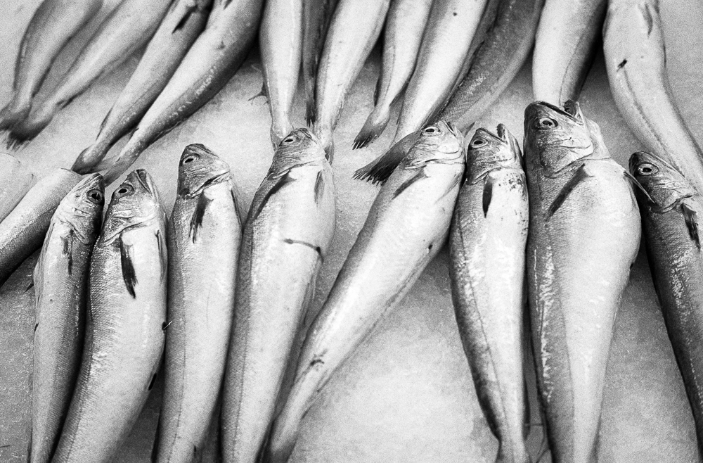 Fish Market, HP5+ in Ilfotec HC