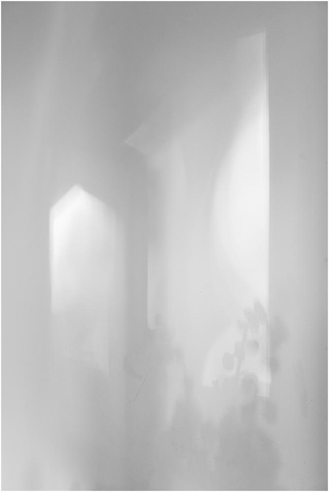 Window Light and Flowers