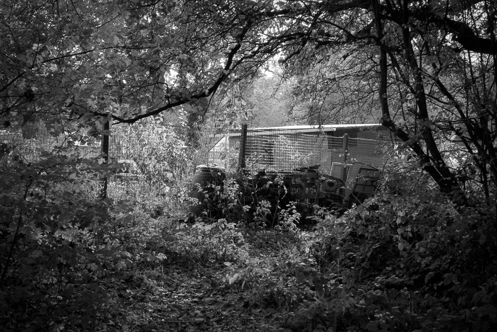 Building in the Woods, Kodak TMAX 100 developed in Ilfotec HC