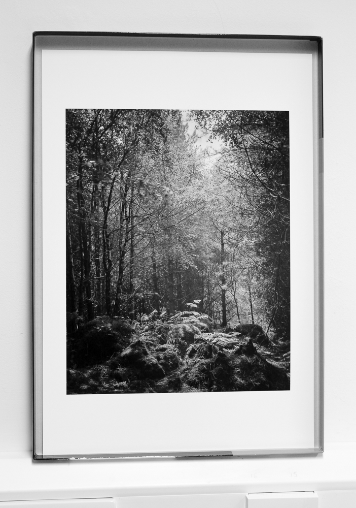 My  Ferns  5x4 image, now printed on A3+ paper. I used Canson Baryta Photographique, a paper which reproduces the generous detail really well.
