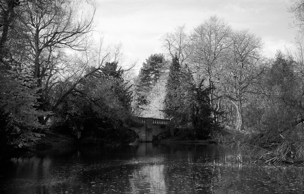 Cannon Hill Park, TMAX 100 film