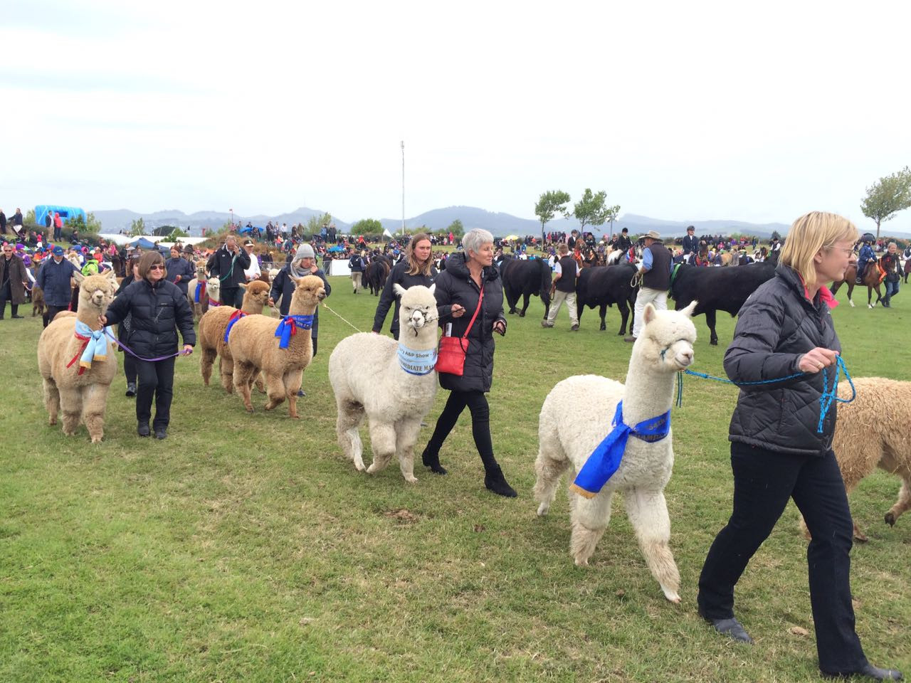 The Ballantynes Grand Parade was the final attraction of the event held on Friday, November 11. It was the showcase of the best of the best with prize winners across most livestock and equestrian sections parading their ribbons. The Parade is led by the Canterbury Caledonian Pipe Band.