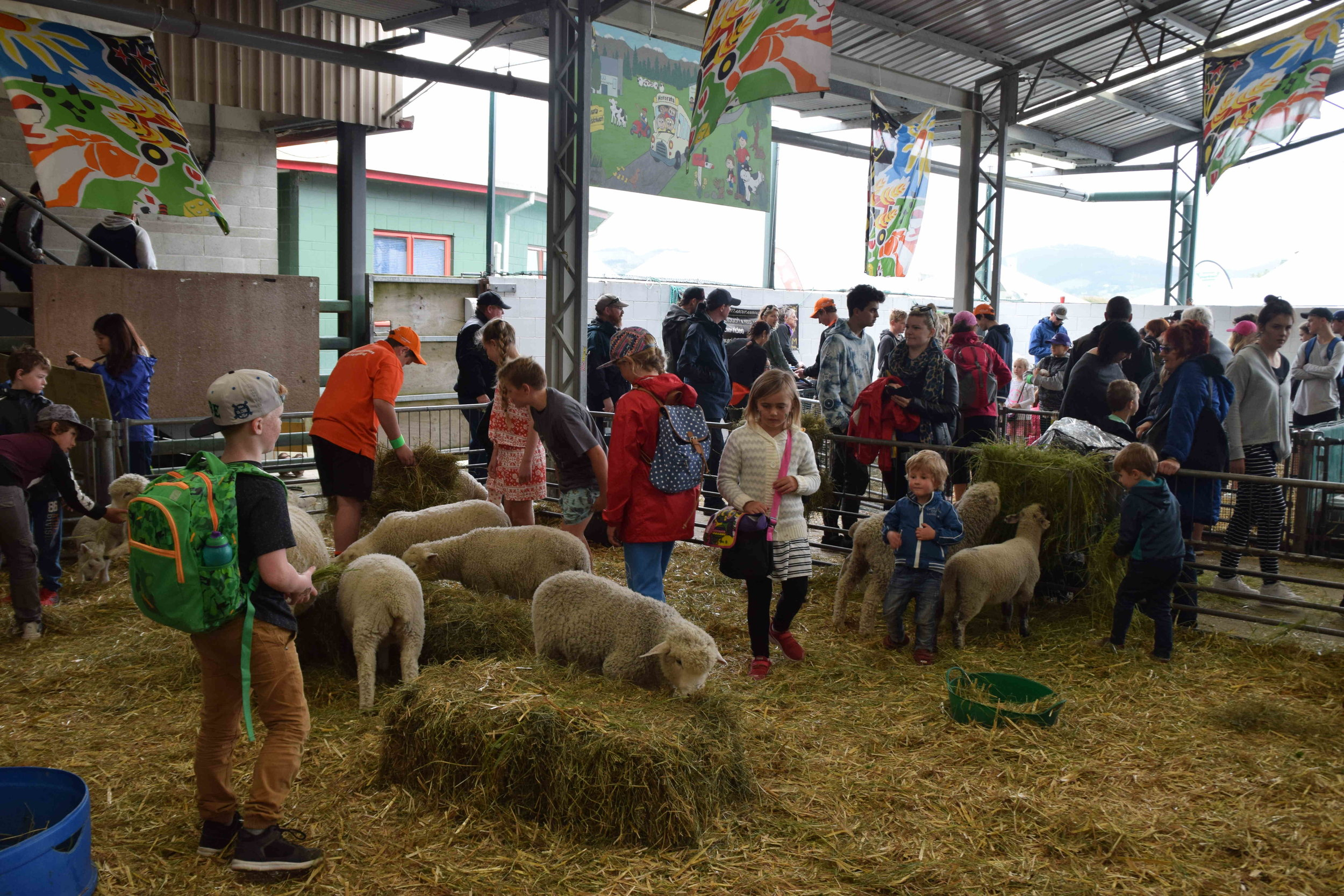 Sheep maternity ward was a special attraction for children visiting the A and P Show