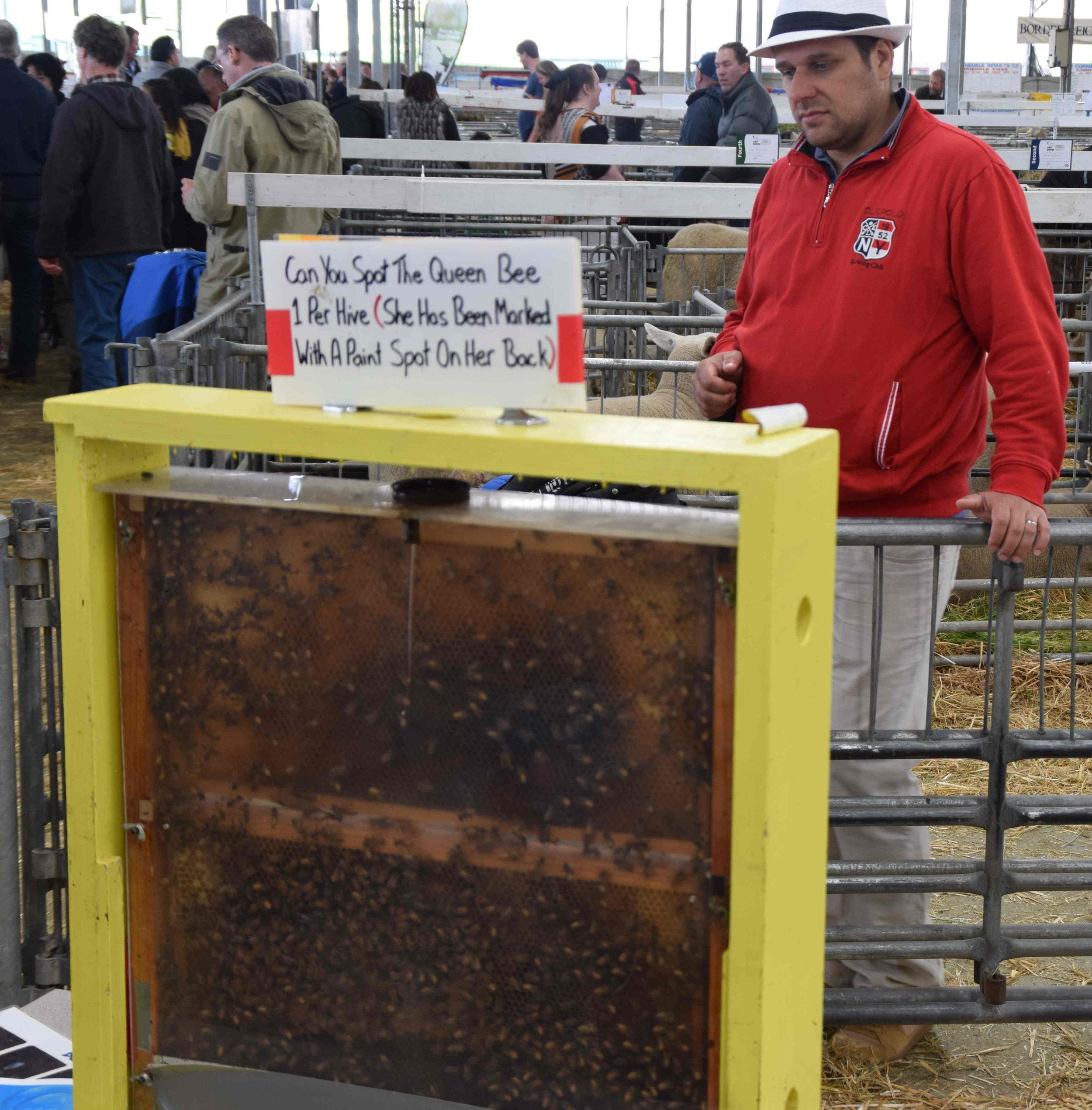 An onlooker learns the art of bee-keeping