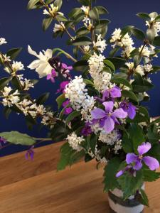 February orchid: it's not an orchid, and it's not February. But still …