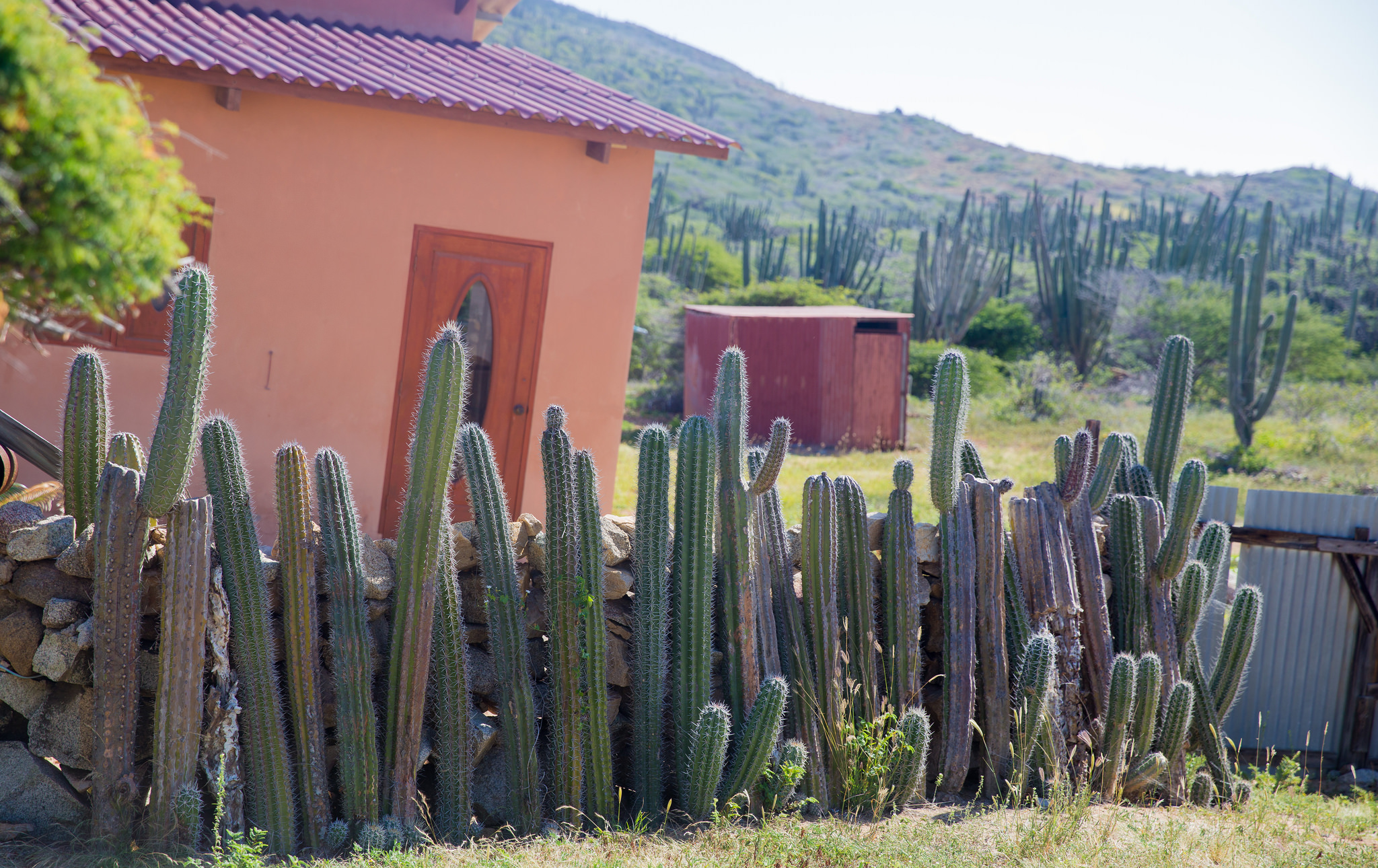 Spine security: a cactus fence. Photograph:  Terry Robinson  on  Flickr .