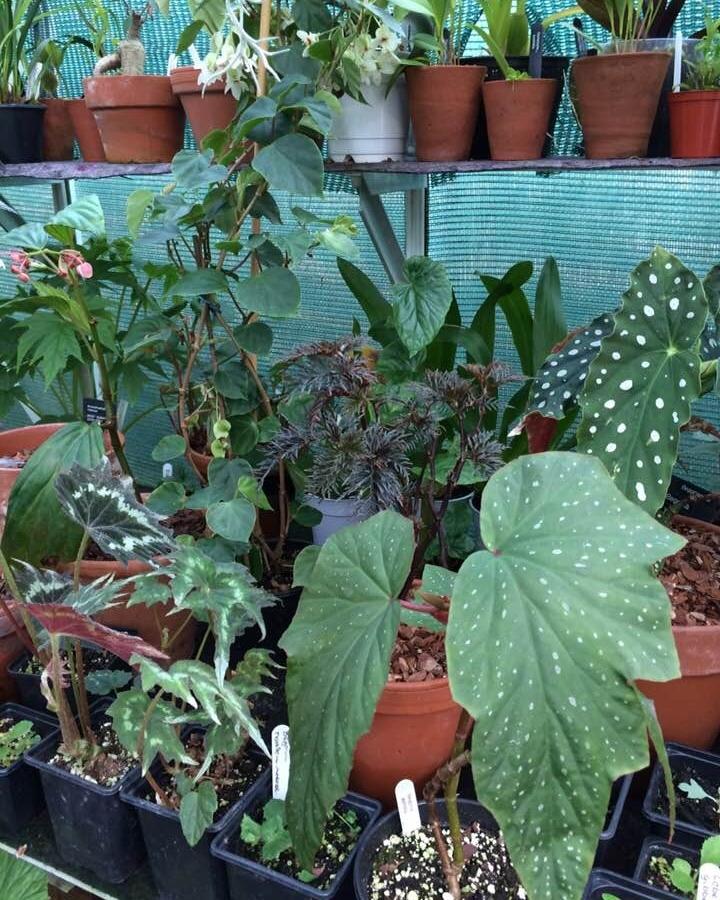 Begonia heaven.