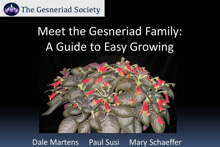 If you're curious to learn more about Gesneriads, check out this  free webinar  from the Gesneriad Society. There are also several other webinars available to buy from the  Gesneriad Society shop .