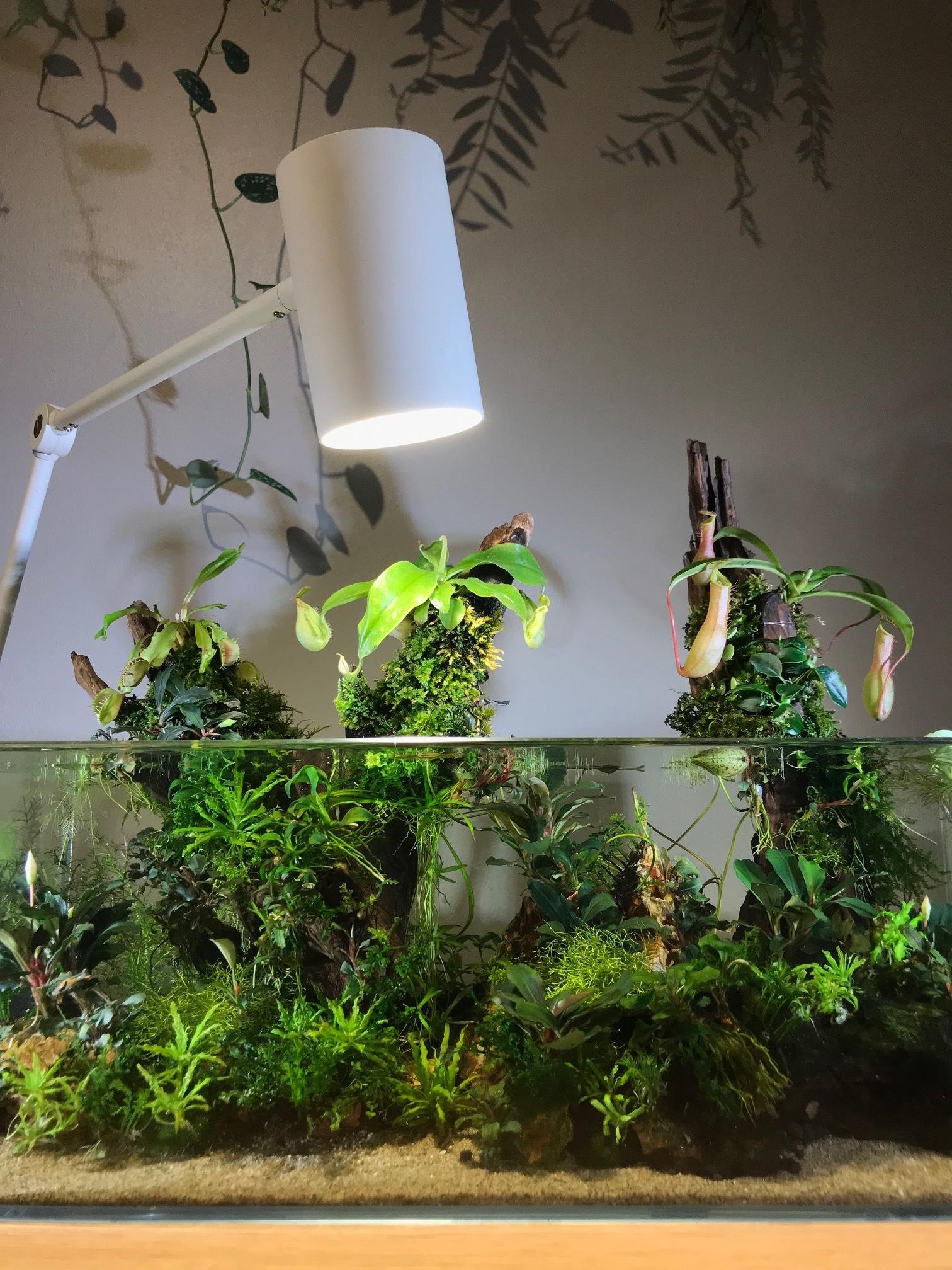 The nano-aquarium is lit by a single LED growlight. Photograph: James Wong.